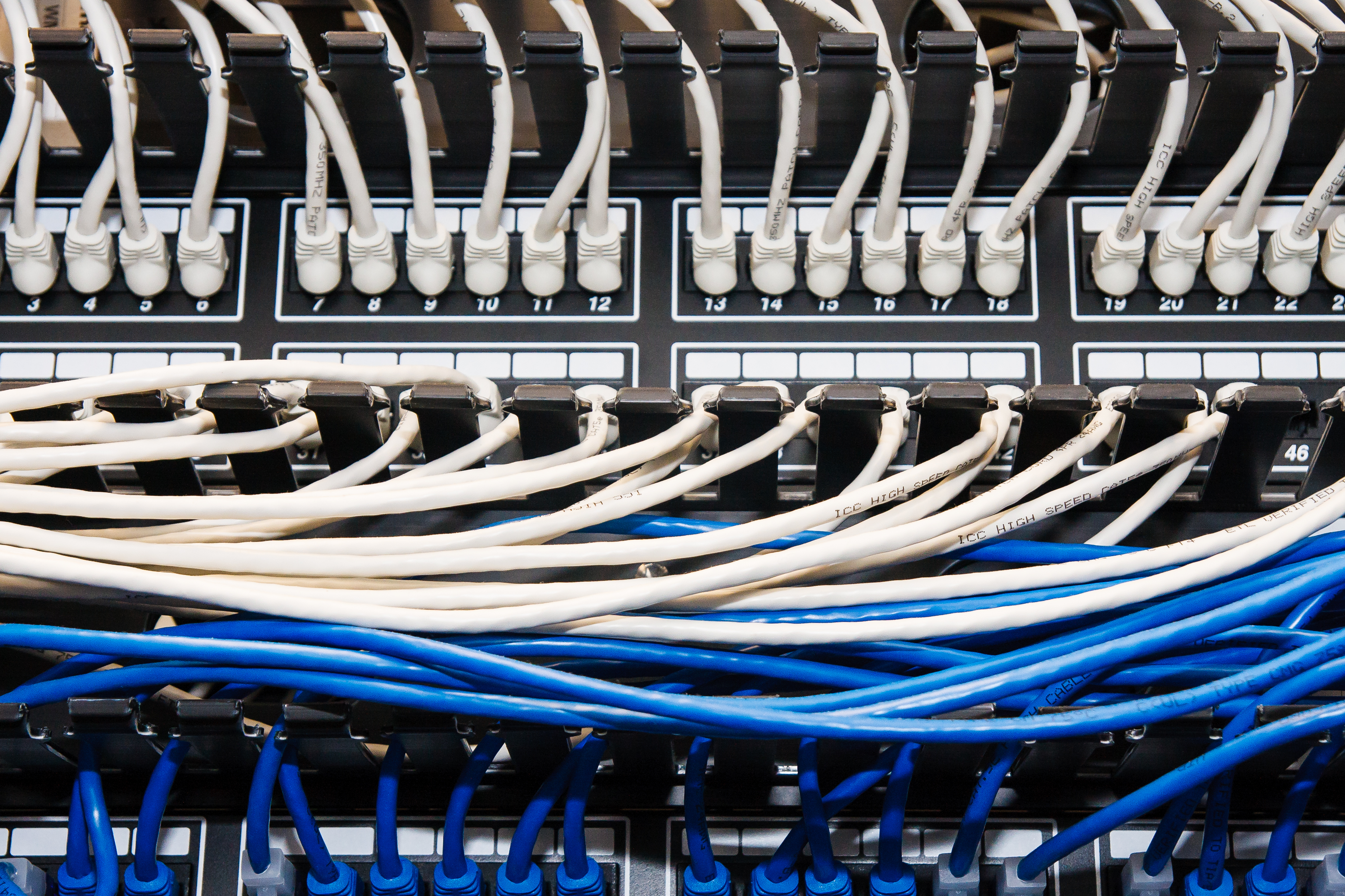 Blue And White Ethernet Cables In Patch Panel
